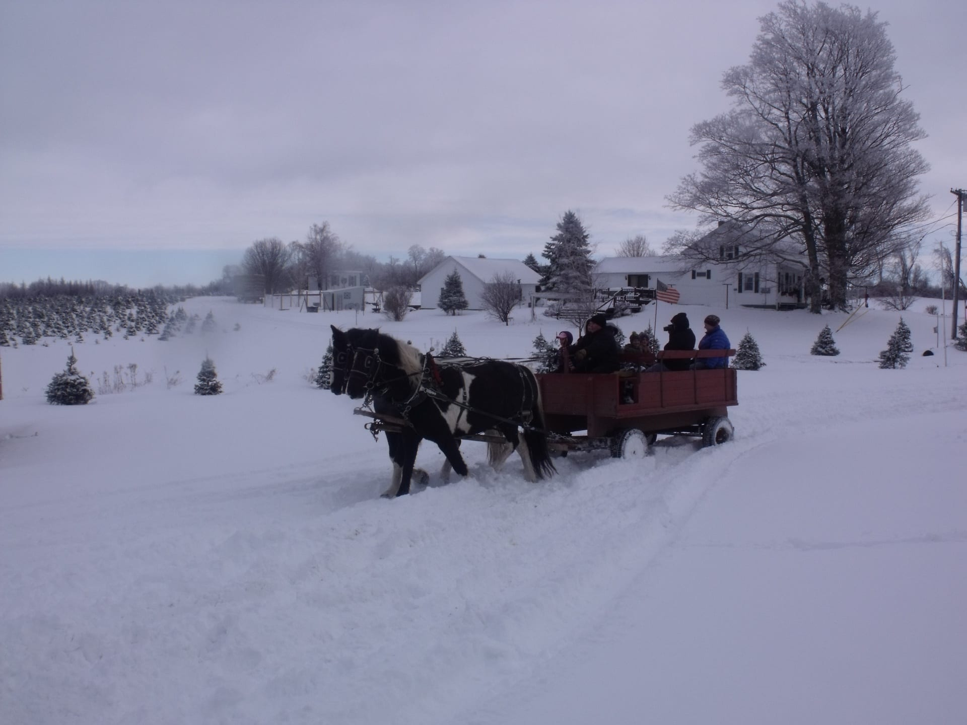 CHRISTMAS PACKAGE  Donated by: SIMMONS FARM  Valued at: $260