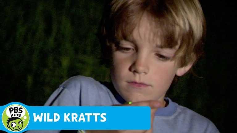 WILD KRATTS   Wild Kratts Glow   PBS KIDS