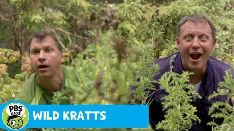 WILD KRATTS | Secret Turkey Lurk | PBS KIDS