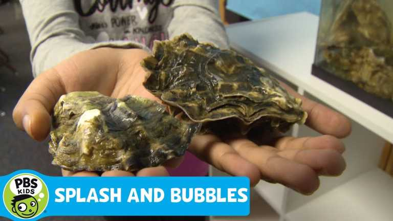 SPLASH AND BUBBLES   Get Your Feet Wet: Oysters   PBS KIDS