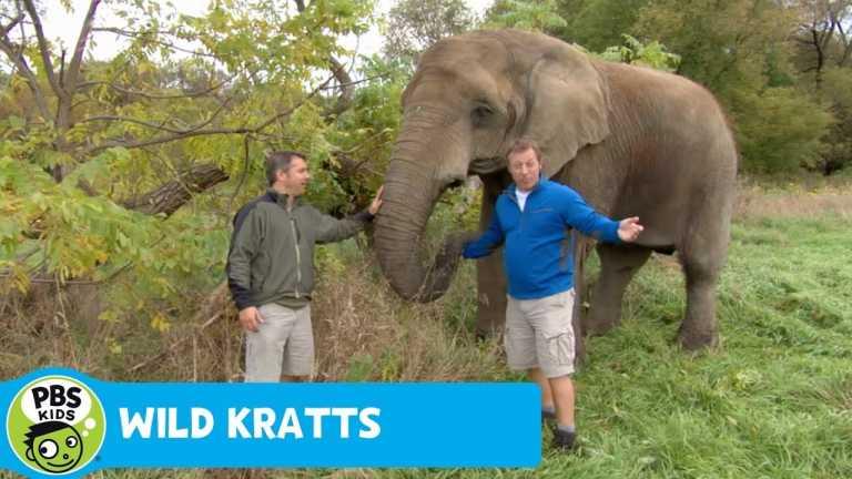 WILD KRATTS | Nosing Around | PBS KIDS