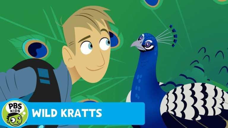 WILD KRATTS | Creature Adventure! | PBS KIDS
