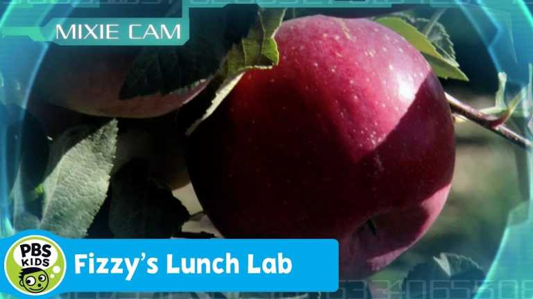FIZZY'S LUNCH LAB | Mixie Reports: Carbohydrates & Sugars | PBS KIDS