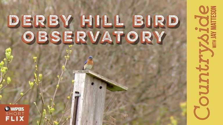Derby Hill Bird Observatory | Countryside with Jay Matteson