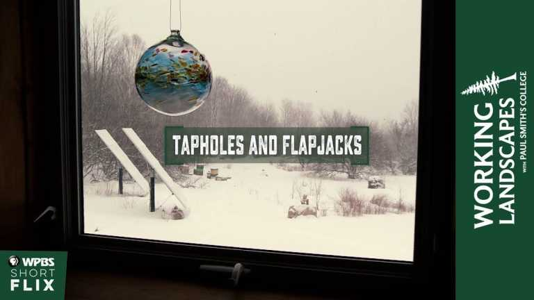 Tapholes and Flapjacks | Working Landscapes with Paul Smith's College  | WPBS Short Flix