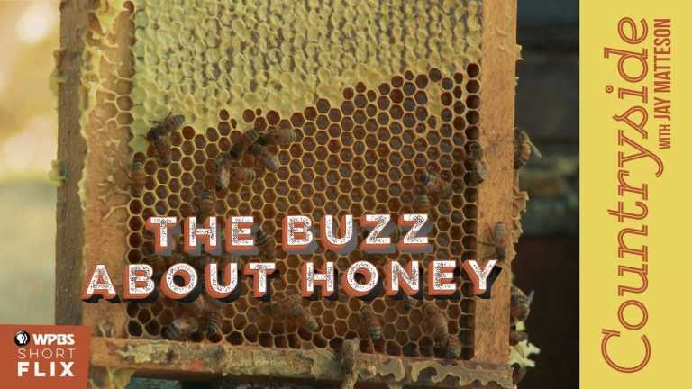 The Buzz About Honey | Countryside with Jay Matteson | WPBS Short Flix