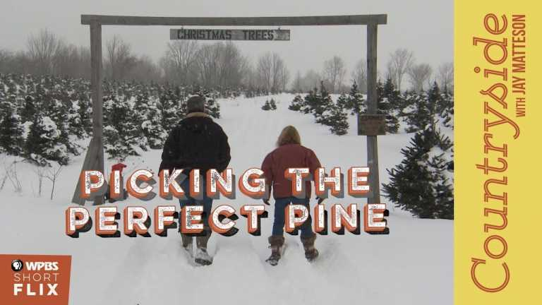 Picking the Perfect Pine | Countryside with Jay Matteson | WPBS Short Flix