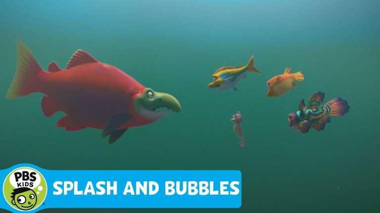 SPLASH AND BUBBLES | Meet Sal | PBS KIDS