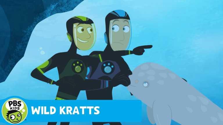 WILD KRATTS | Baby Narwhal! | PBS KIDS