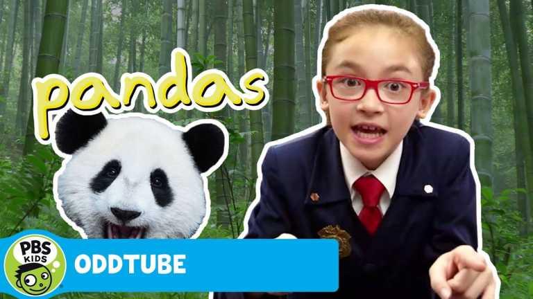ODDTUBE | Pandas | PBS KIDS