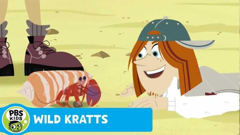 WILD KRATTS | Secret of the Hermit Crab Home | PBS KIDS