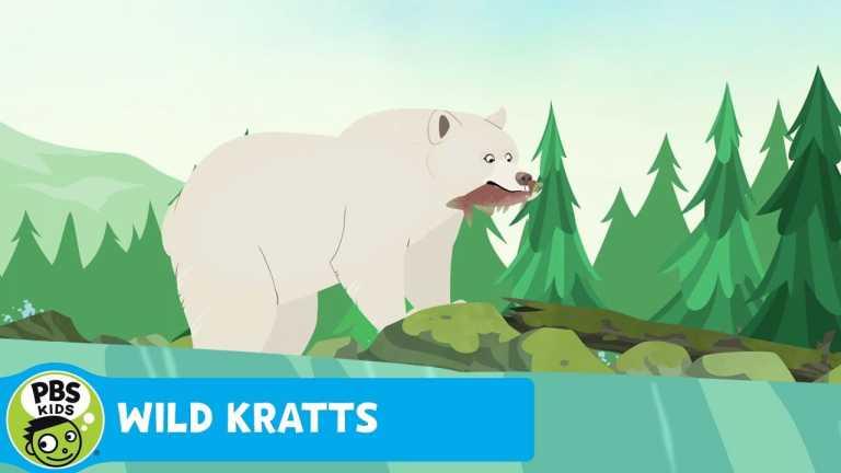 WILD KRATTS | Catching Salmon Like a Bear | PBS KIDS