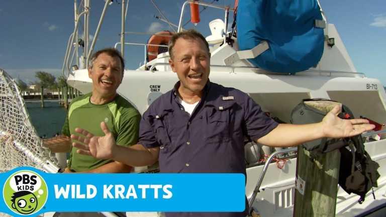 WILD KRATTS   Carribean Sea!   PBS KIDS