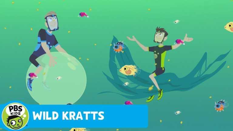 WILD KRATTS   Underwater Nursery   PBS KIDS