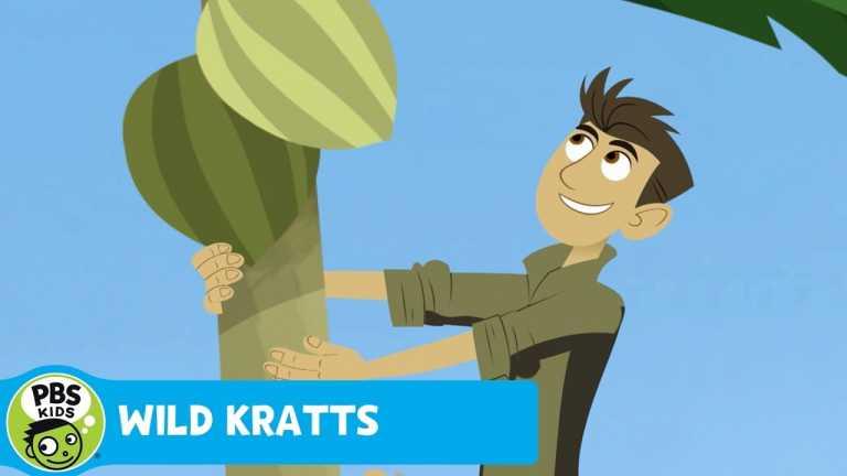 WILD KRATTS | Puffin Power | PBS KIDS