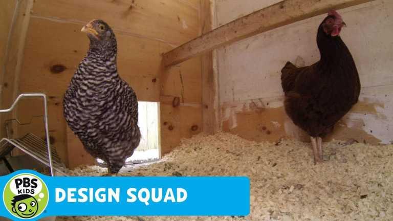 DESIGN SQUAD | Chicken Feeder Challenge | PBS KIDS
