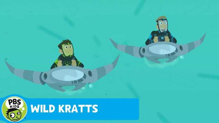 WILD KRATTS | Sailfish Speed! | PBS KIDS