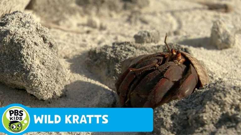 WILD KRATTS | Shell Surprise! | PBS KIDS