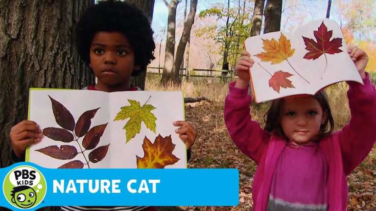 NATURE CAT | Leaves | PBS KIDS