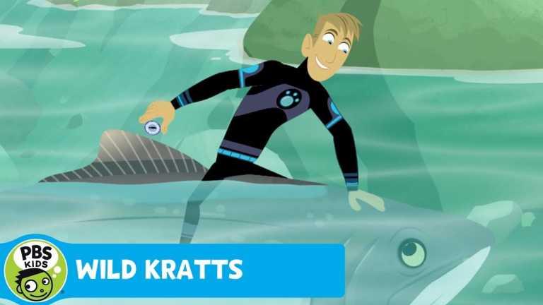 WILD KRATTS | Salmon Power! | PBS KIDS
