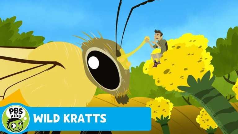 WILD KRATTS   Follow That Bee!   PBS KIDS