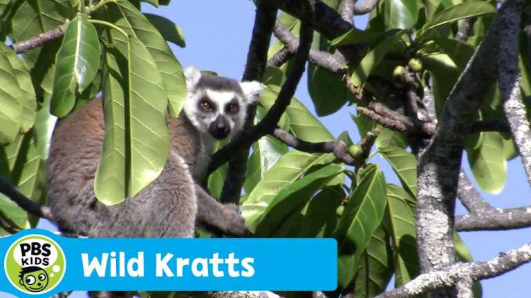 WILD KRATTS | Using Scent for Communication | PBS KIDS