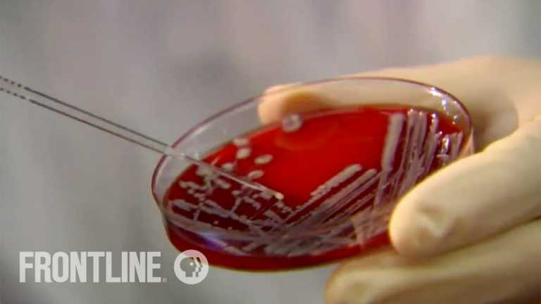 HUNTING THE NIGHTMARE BACTERIA | Drug resistant superbugs