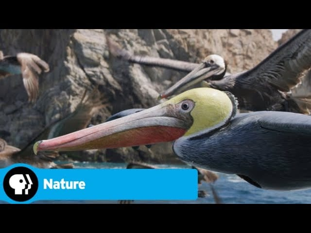 Official Preview | Spy in the Wild 2 – Episode 2: The North | NATURE | PBS