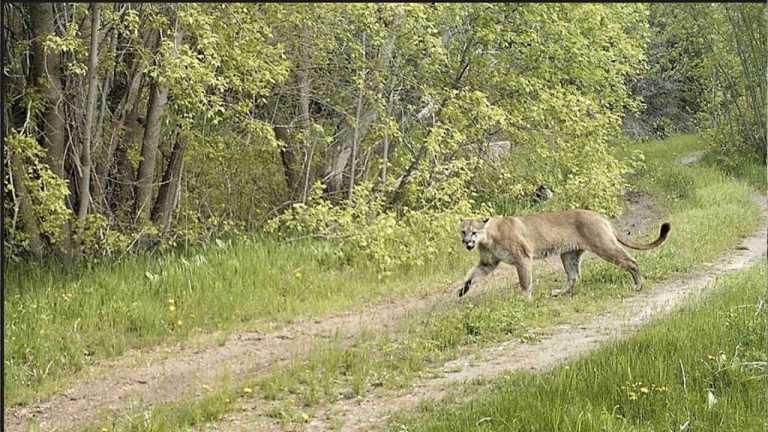 WildSci in Utah