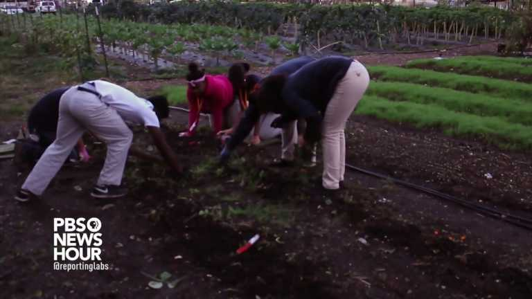 Gardening organization services entire community with organically grown food