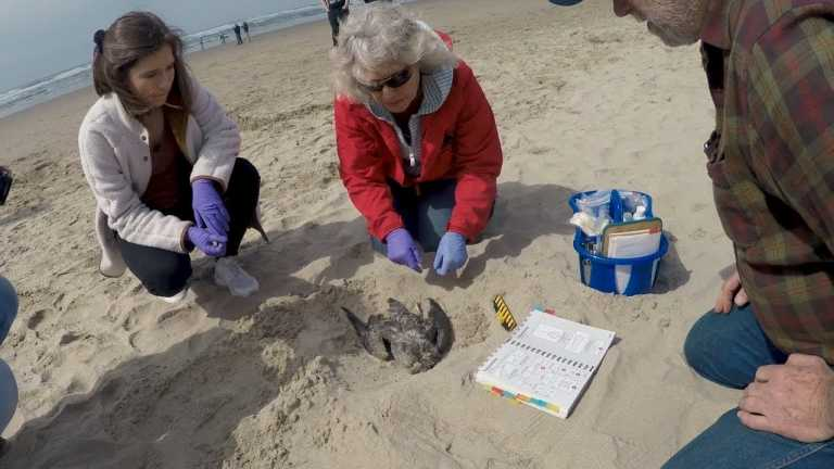Seabirds and Citizen Science