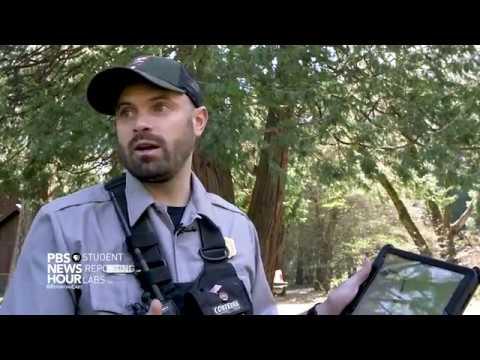Yosemite National Park's innovates and educational black bear program KeepBearsWild.org