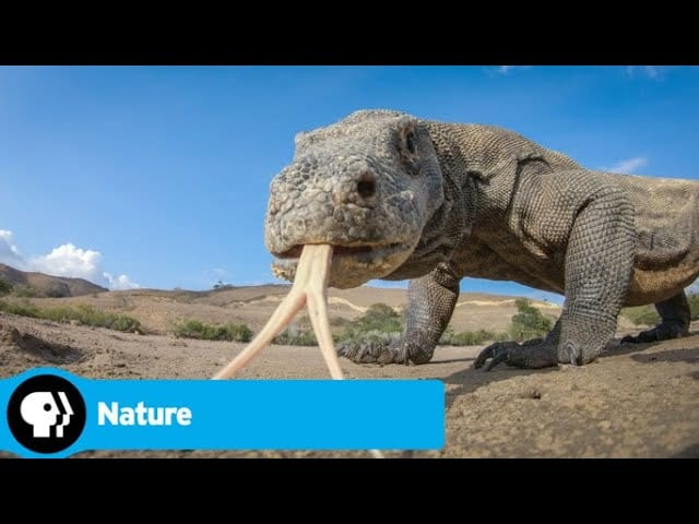 Official Preview | Spy in the Wild 2 – Episode 3: The Islands | NATURE | PBS
