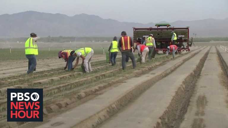 Deemed essential, California farmworkers risk disease and deportation