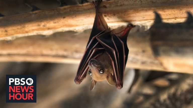 The fate of bats is hanging in the balance. That could have very real consequences for us