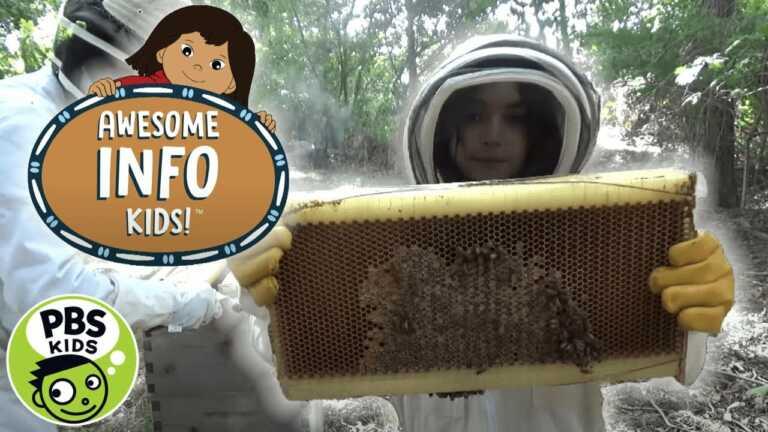 Molly of Denali | Awesome Info Kids: Beekeeping | PBS KIDS