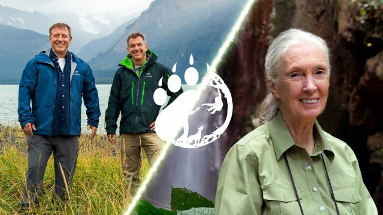 Wild Kratts | A Creature Conversation with Dr. Jane Goodall & The Kratt Brothers | PBS KIDS