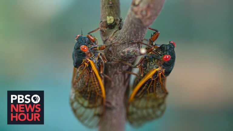 Cicada season: What to expect from the coming brood that's been underground for 17 years