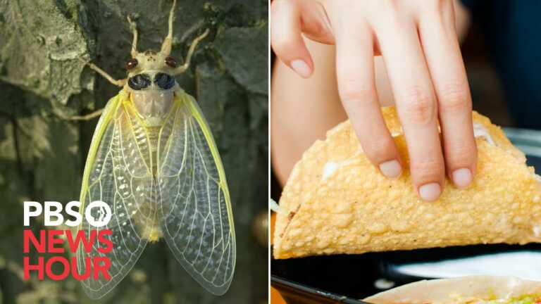 WATCH: Cicada tacos, cookies and wine pairings. How to plan your emergence meal