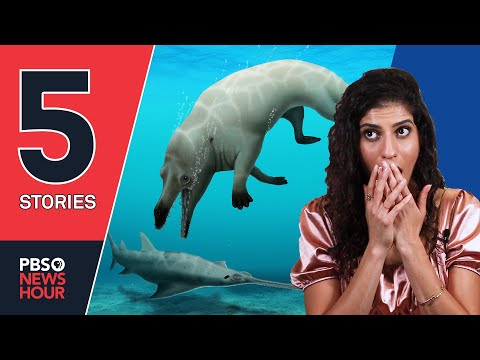 A 4-legged whale, China limits gaming and other stories you missed   5 STORIES   September 3, 2021