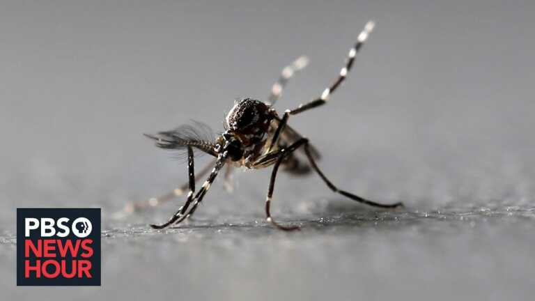 Florida has a dengue problem. The solution may be more mosquitoes